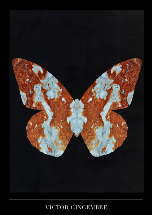 Papillon Marbre